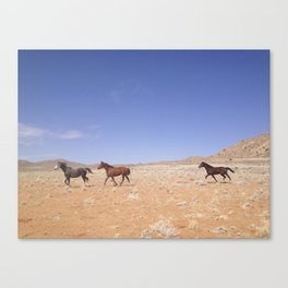 Wild Horses Running in Namibia Canvas Print
