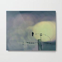 City Crow - Dark Crows Series Metal Print