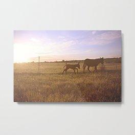 Donkey Sunrise 2 Metal Print