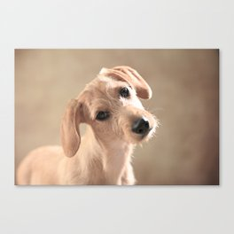Dog puppy Canvas Print