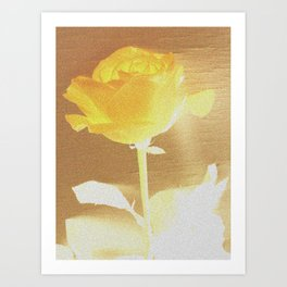 Sunshine Rose Art Print