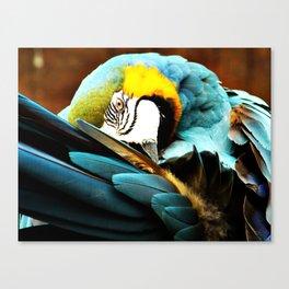 Parrot I Canvas Print