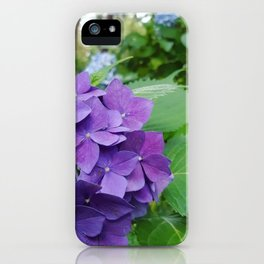Hydrangeas are my favorite iPhone Case