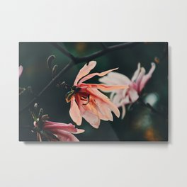 Blooming in the garden Metal Print