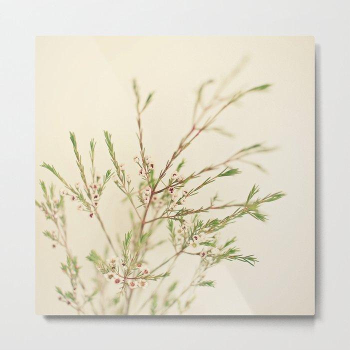 Waxflower Metal Print
