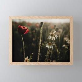 Spring morning | photo print wildflowers in field by sunrise Framed Mini Art Print