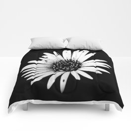 Daisy Delight in BW Comforters