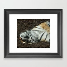 Lazy Days Sleeping in the Sun Framed Art Print