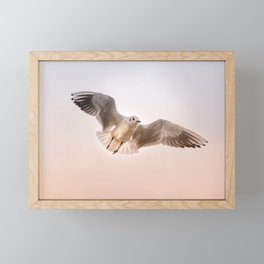 Seagull Floating Through Sunset Sky Framed Mini Art Print