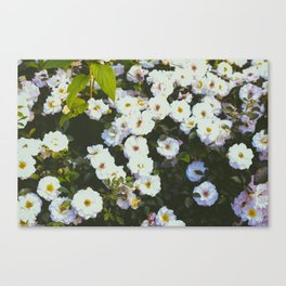 Early Summer Flowers Canvas Print