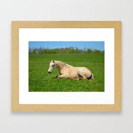 A relaxing filly Framed Art Print