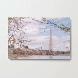 Washington DC Cherry Blossoms - Washington Monument Metal Print