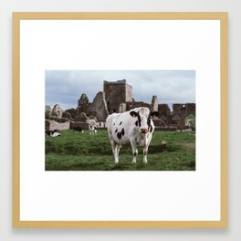 Cows of the Castle - Ireland Framed Art Print