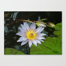 Flower Pic 4 Canvas Print
