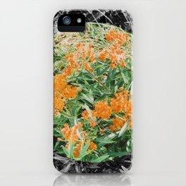 High Line Sunshine iPhone Case