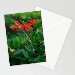 Notro flower in cucao chiloe Stationery Cards