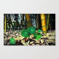 Nasturtiums & Bamboo Canvas Print