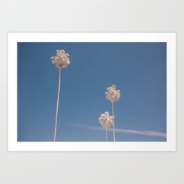 Three White Palms Art Print