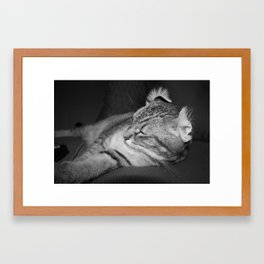 Shag v2.  Framed Art Print