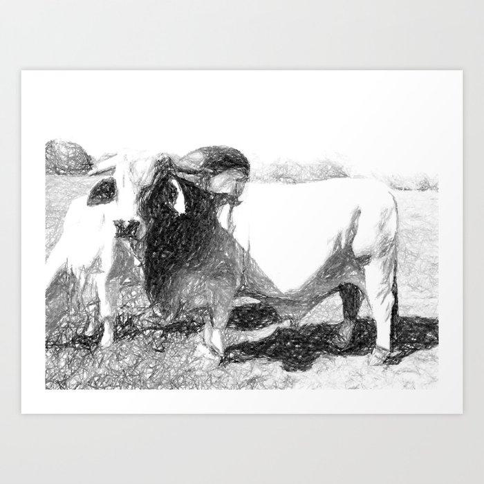 Brahman Bulls sketch Art Print