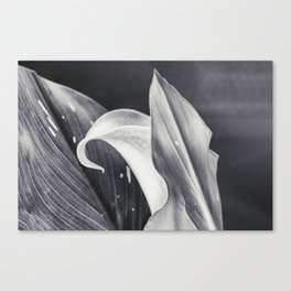 Calla Lily Flower in Black and White  Canvas Print