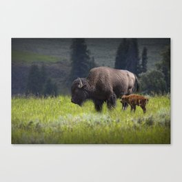 American Buffalo Bison Mother and Calf in Yellowstone National Park Canvas Print