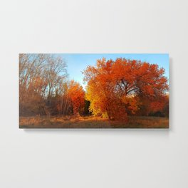 Autumn in the forest park Metal Print