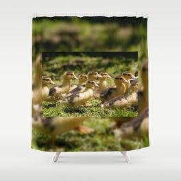 Yellow Muscovy duck ducklings running Shower Curtain
