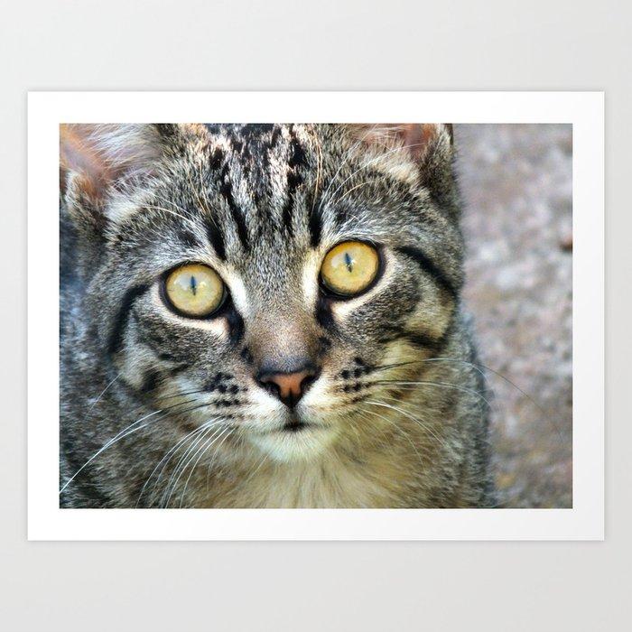 Eyes of a Tabby Cat Art Print