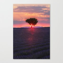 Lavender sunset in Valensole Canvas Print