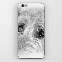 Irish Wolfhound iPhone Skin