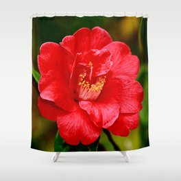 Camellia japonica Shower Curtain