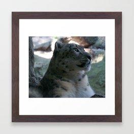 Snow Leopard 2 Framed Art Print