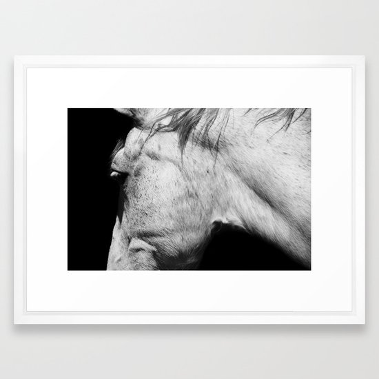 Casper | Animals | Horse Photography | black-white | nature Framed ...