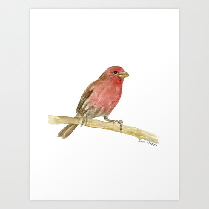 House Finch Bird Watercolor Artwork by Susan Windsor - X-LARGE (s6-11342623p4a1v3) photo
