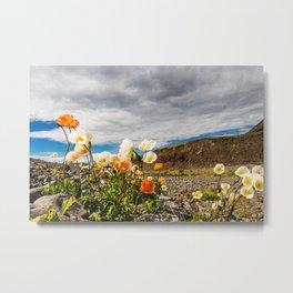 Icelandic Poppies III Metal Print