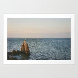 A Lone Seagull Art Print