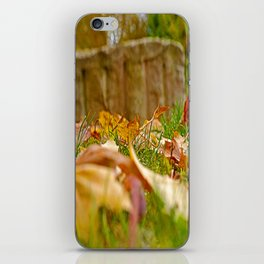 Autumn day 2016 iPhone Skin