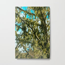 Green Dreams of a Tree draped with Moss Metal Print