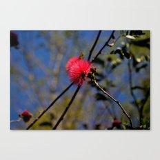 Pink Puffs Canvas Print