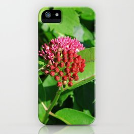 Couched in Your Indifference iPhone Case