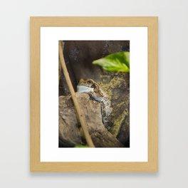 Veined tree frog Framed Art Print