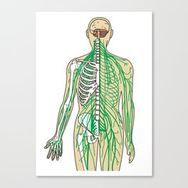 Human neural pathways Canvas Print