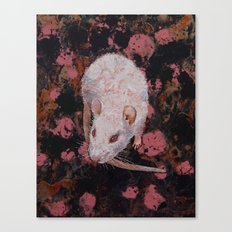 White Rat Canvas Print