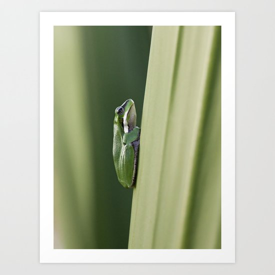 Dwarf Green Tree Frog Art Print
