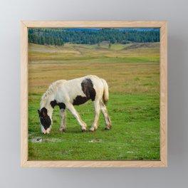 Gypsy Vanner Filly 5506 - Colorado Framed Mini Art Print