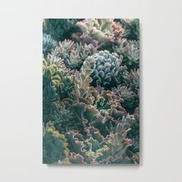 Mornings In The Succulent Garden #1 Metal Print