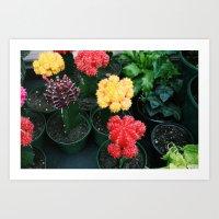 Colorful Cacti Art Print