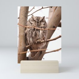 Wild Owl - Ivins, Utah Mini Art Print