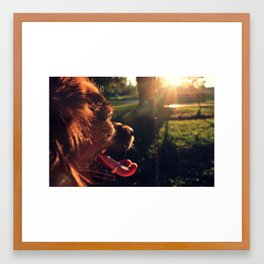 dog daze Framed Art Print